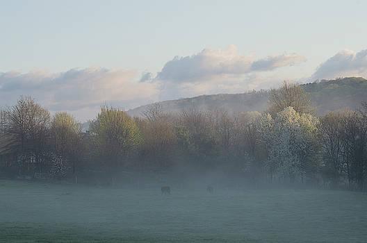 Sunrise In The Mist by Andrea Swiedler