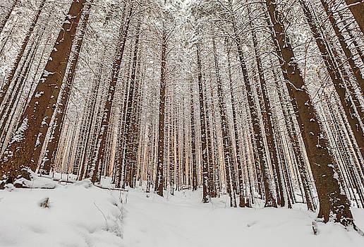 Sunrise in winter forest by Lukasz Szczepanski