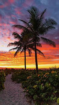 Sunrise Palm Path Delray Beach Florida by Lawrence S Richardson Jr