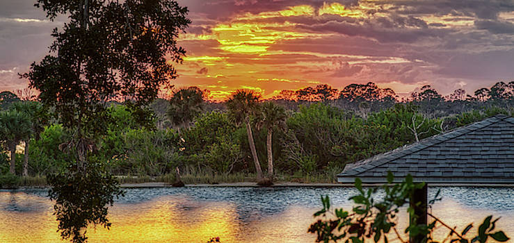 Sunrise Palms by Dillon Kalkhurst