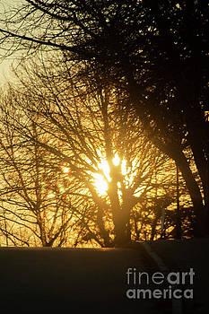 Sunrise Through The Tree by Sharon Mayhak