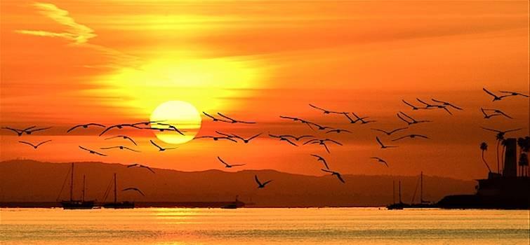 Sunrise White Island by John R Williams
