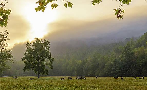 Sunrise with Elk in Cataloochee Valley by Ina Kratzsch