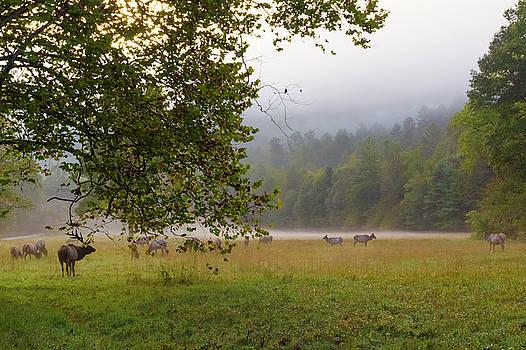 Sunrise with Elks in Cataloochee Valley by Ina Kratzsch