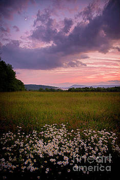 Sunset and Daisy's  by Alana Ranney