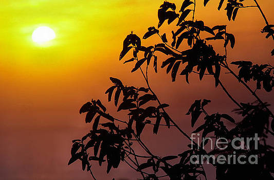 Sunset and Tree Branches by Thomas R Fletcher