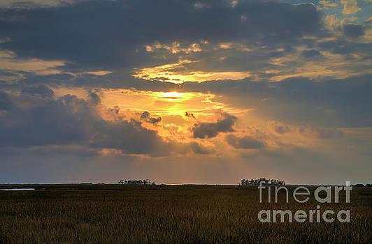 Sunset At Florida Wetlands by Felix Lai