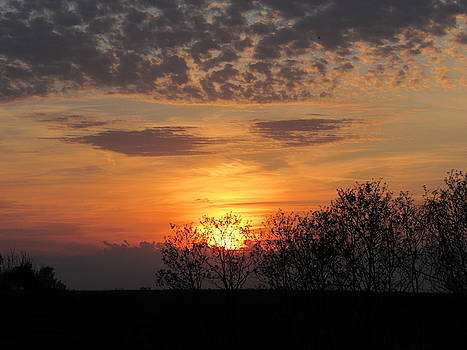 Sunset Behind the Trees by Mandy Byrd