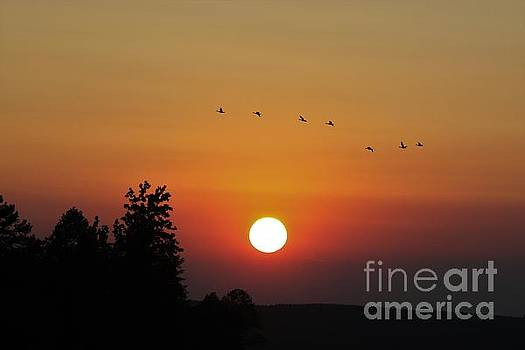 Sunset Flight by Angela Stafford