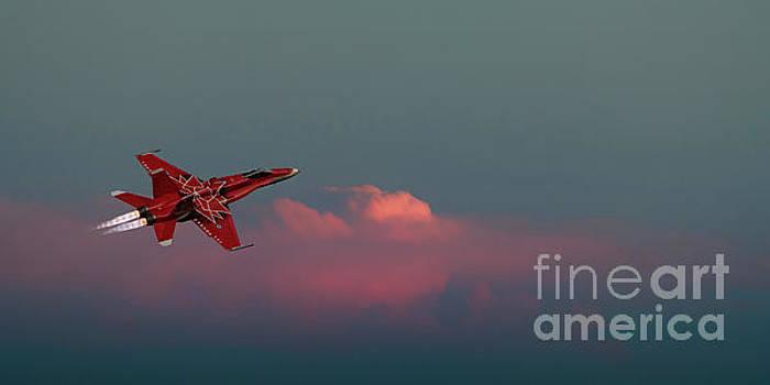 Sunset Flight by Brad Allen Fine Art