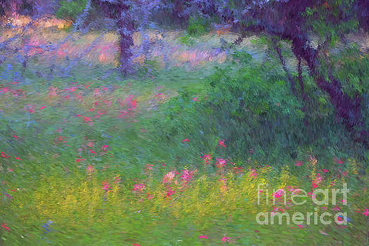 Sunset in Flower Meadow by Sharon Beth
