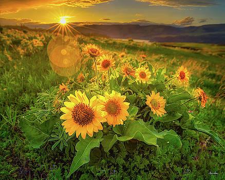 Chris Steele - Sunset Over Rowena 2