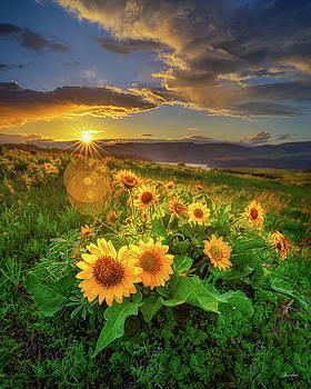 Chris Steele - Sunset Over Rowena