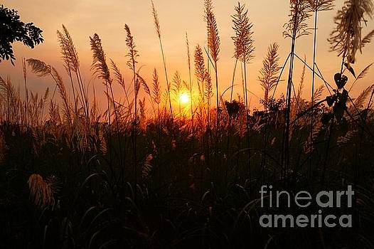 Sunset peeking through the grasses by Christopher Shellhammer