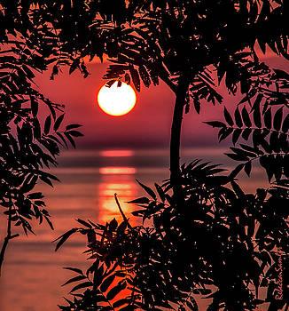 Sunset Silhouette by Rebecca Samler