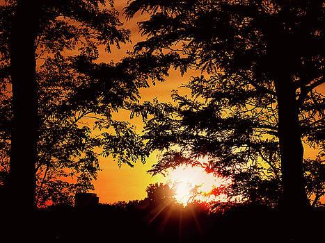 Sunset Tree Glow by Kathy Gail