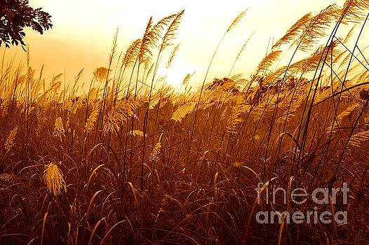Sunset upon the grassland by Christopher Shellhammer