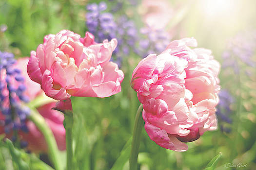 Sunshine and Tulips by Trina Ansel