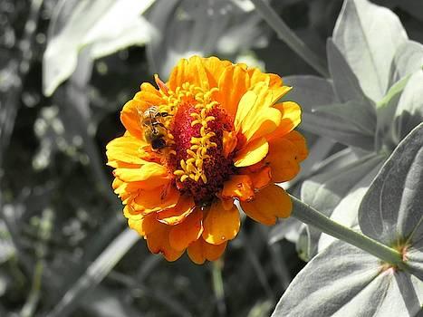 Sunshine Yellow by Mandy Byrd