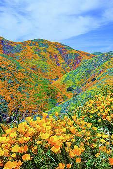 Super Bloom by Brian Knott Photography
