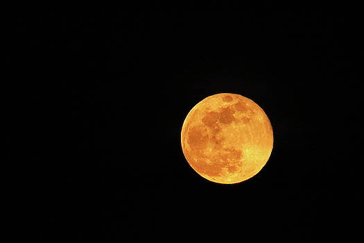 Super Moon by Gerald Salamone