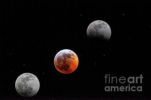 Super Wolf Blood Moon Lunar Eclipse by Dale Powell