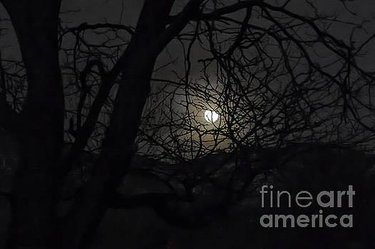 Super Wolf Moon by Susan Warren