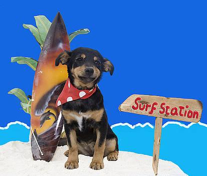 Surf puppy by Nikki Attree