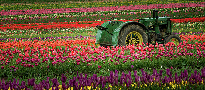 Surrounded By Tulips by Don Schwartz