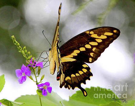 Swallowtail Butterfly by Mariarosa Rockefeller