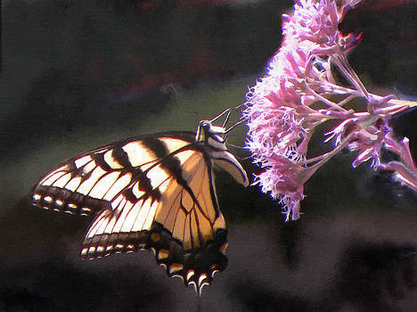 Swallowtail Butterfly On Pink by Sandi OReilly