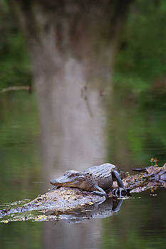 Susan Rissi Tregoning - Swamp Life
