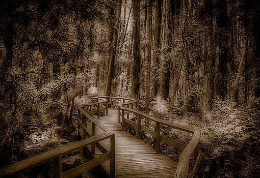 Swamp Walk by Jeffrey Klug