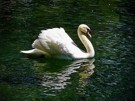 Swan lake by Tamara Sushko