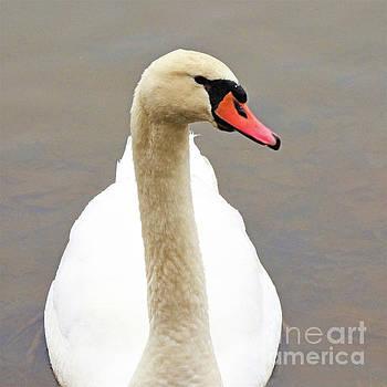 Sharon Williams Eng - Swan Portrait