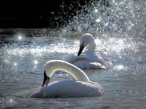 Swans by Savannah Gibbs