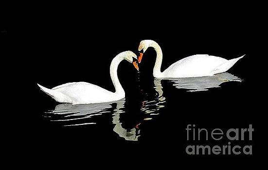 Swans by Stacey Brooks
