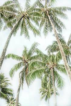 Swaying Palms by Ramona Murdock