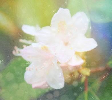Sweet Azalea 10 by Cathy Lindsey