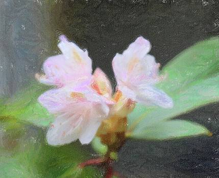 Sweet Azalea 13 by Cathy Lindsey