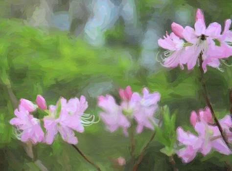 Sweet Azalea 18 by Cathy Lindsey