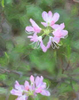 Sweet Azalea 20 by Cathy Lindsey