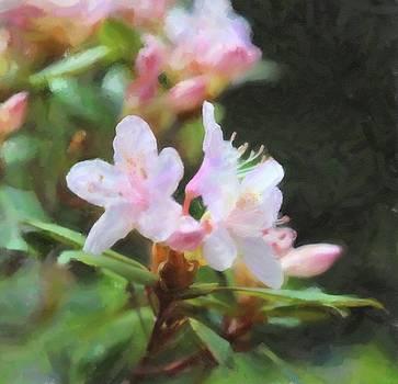 Sweet Azalea 3 by Cathy Lindsey