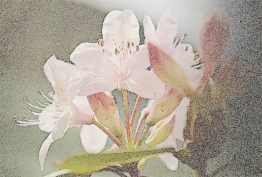 Sweet Azalea 5 by Cathy Lindsey
