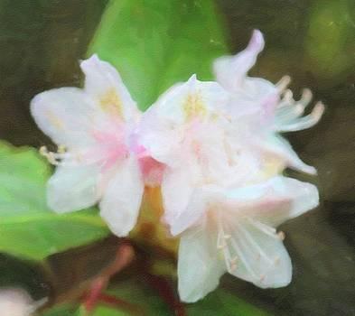Sweet Azalea 7 by Cathy Lindsey
