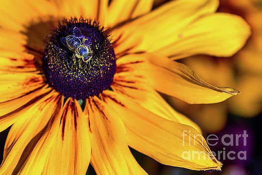 Sweet flower by Viktor Birkus