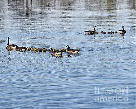 Swimming Lessons by Kathy M Krause