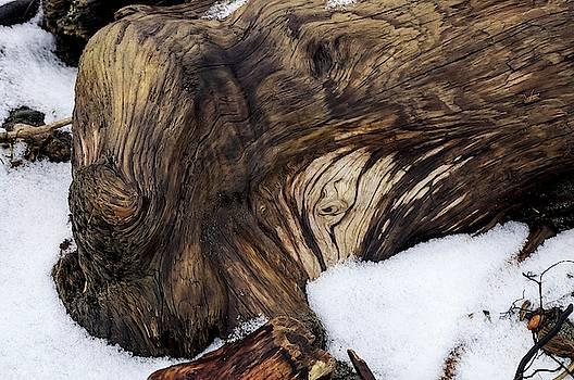 Tom Trimbath - Swirls Burls And Snow