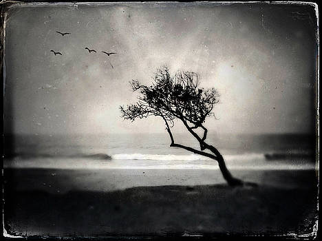 Sycamore Beach Tree by John Rodrigues