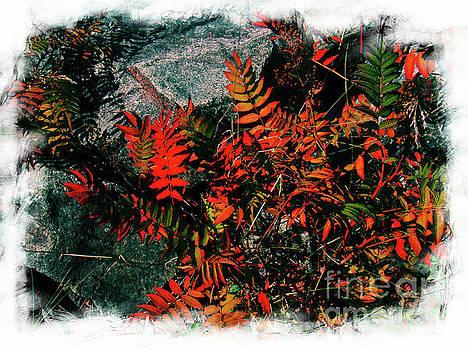 Sydney Leaves by Al Bourassa